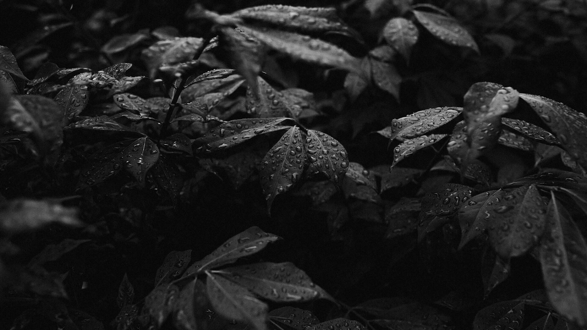 nature-01