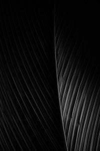 nvmb - cosmic